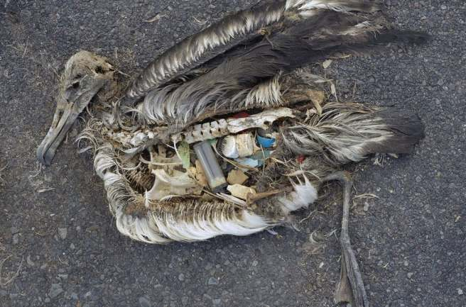 plastic bird
